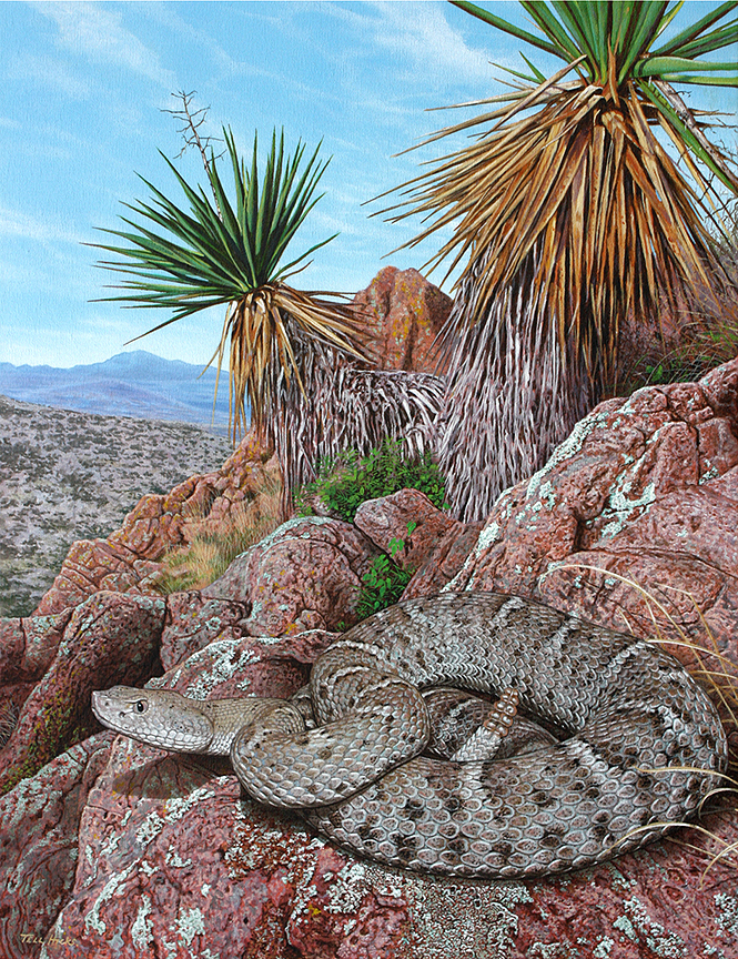 Rattlesnakes of Arizona Cover Art By Tell Hicks